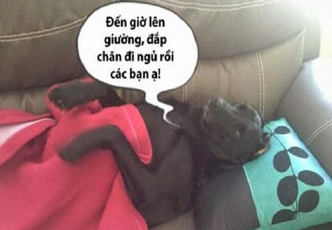ảnh chế ngủ ngon
