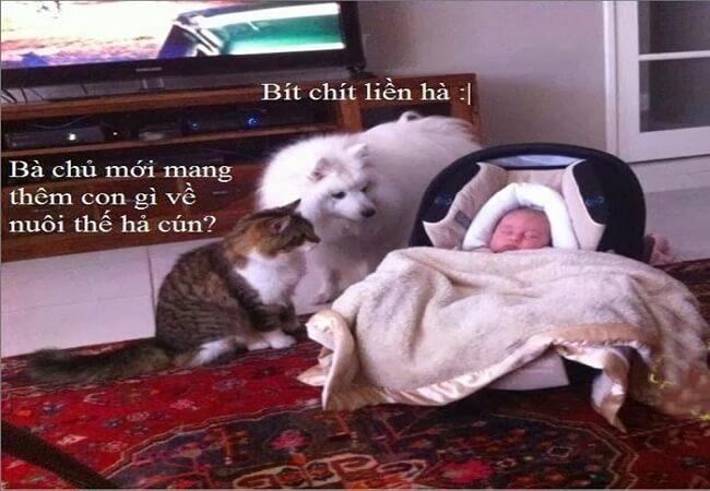 hài hước động vật