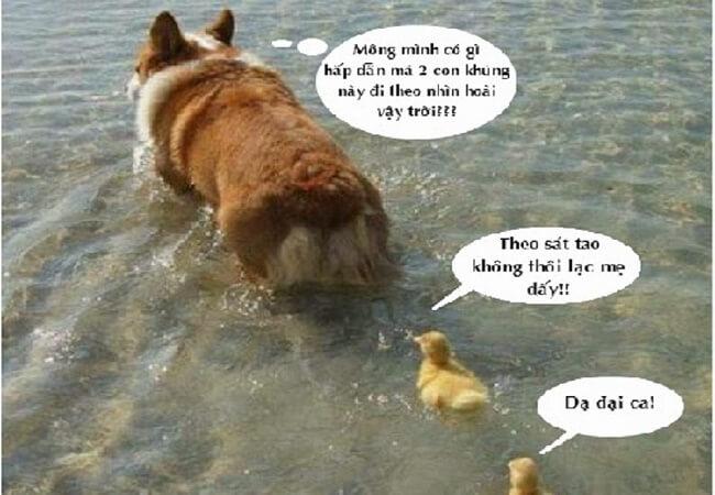 Hình ảnh dễ thương chú chó và 2 con gà con