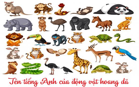 Từ vựng và cách phát âm các con vật mà bé tiếp xúc hàng ngày và trong sở thú